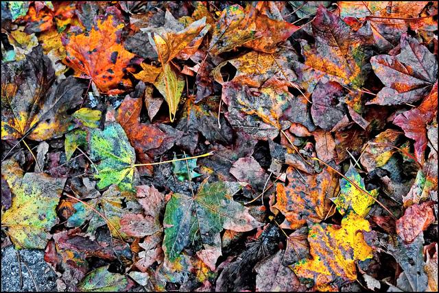 Fall Maintenance Tasks: Tips and Tricks